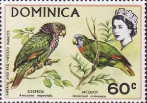 Imperial-Amazone-Amazona-imperialis-Red-necked-Amazon-Am