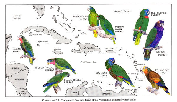 parrots-west-indies-map