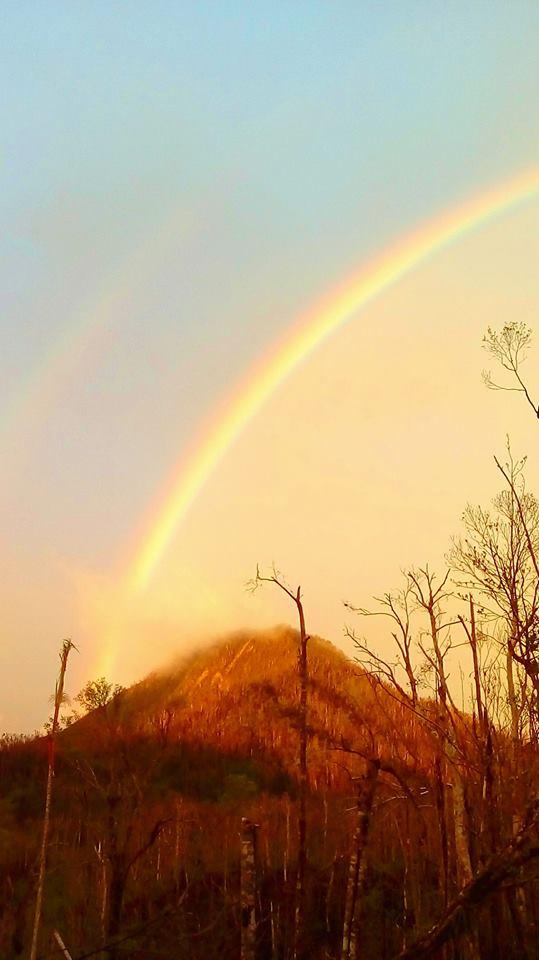 denus rainbow