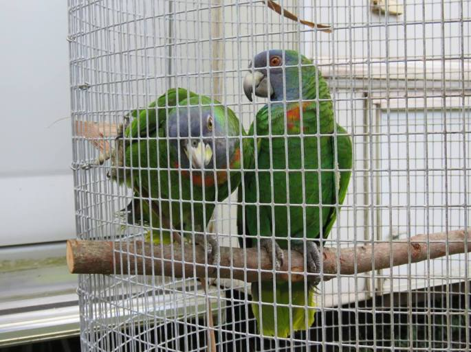 jaco pair